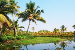 Zenith Offer: Priceless Goa Like Never Before Rs 10999/-