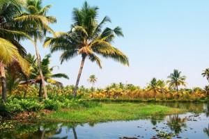Zenith Offer: Priceless Goa Like Never Before Rs 10999/-
