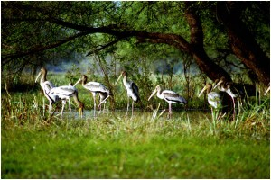 Weekend Gateway To Bharatpur Tour Package By Hi Tours
