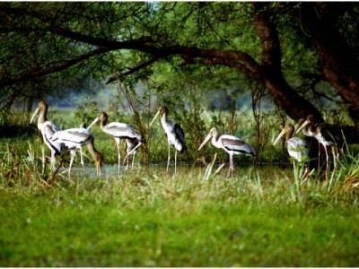 Bharatpur Weekend Holiday Package From Compass Tours