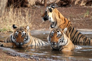 Triangle Tour & Wildlife Package By Tour My India