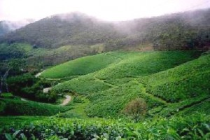 Best of Kerala Package 4 Days/ 3 Nights at Rs. 8960 from Iris Holidays