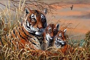 5 Days Wildlife & Tiger Jungle Safari Tour Package