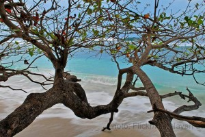 Breathtaking Andamans (Ex. Chennai) package from Yatra