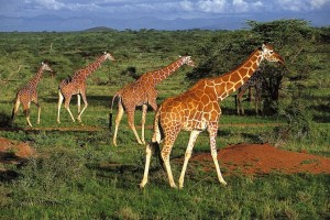 8 Days Kenya Wildlife Tour Package