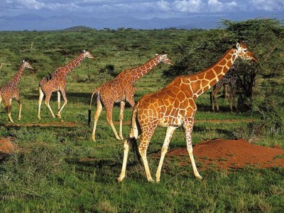 Kenya Wildlife tour from Diya Holidays