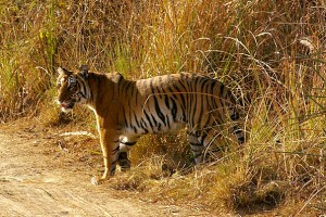 Jim Corbett  Tour Package from Pearl Tourism