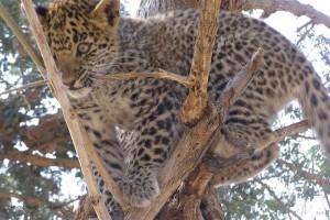 Explore Chhattisgarh Wildlife Tour Package
