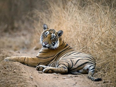 Amazing Wildlife sanctuary Package from aarch tours