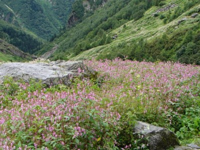 VALLEY OF FLOWERS TREK with HEMKUND SAHIB