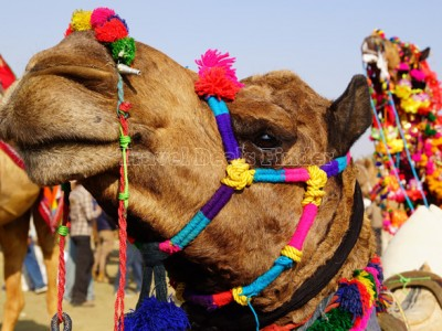 Rajasthan Marvels- North India Package from travel guru