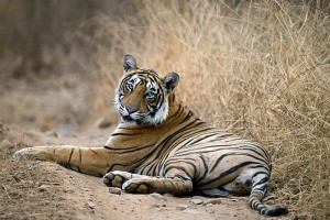 Jaipur-Ajmer-Pushkar with Ranthambore tour from aarchtours