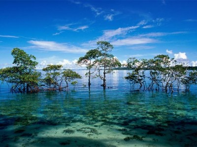 Super Saver Andaman Tour Package from Cox & Kings