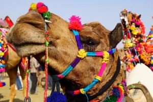 Divine Rajasthan from Thomas Cook