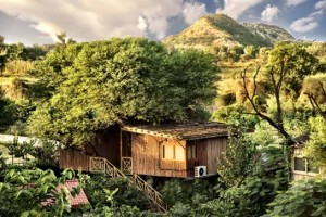 The Tree House Resort Jaipur Package from groupon