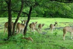 Chhattisgarh Wildlife Package From Travel Masti