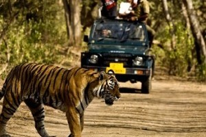 Jim Corbett & Nainital Tour Package