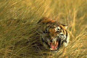 Wildlife of Sunderban Tour Package