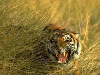Explore Wildlife in Sunderban  Tour Package From Goibibo