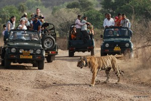 India Nepal Wildlife safari Package From Compass Tours