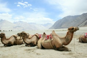 Fascinating Ladakh Tour Package by Ezeego1