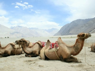 Fascinating Ladakh Tour Package From ezeego1