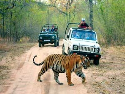 Discovering India's Wildlife with Taj Safati  Package From Compass Tour