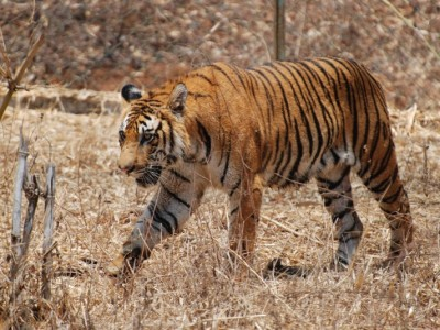 Explore Corbett National Park Package From Hi Tours