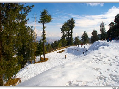 Explore Delight Shimla Tour Package From Bindass Holidays