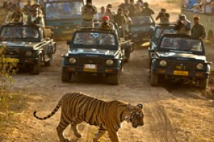 Attractive Rajasthan Tour Package From Greenland Journey