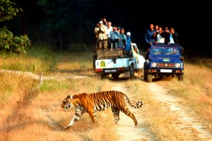 Nanital & Jim Corbett Travel Package by Kesari Travel