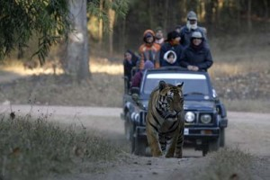 Exotic Madhya Pradesh Tour Package