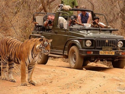 Tadoba National Park Tour Package From Ezeego1