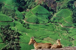 Weekend In Munnar Tour Package By Via