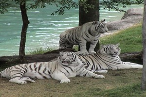 Odisha Tour Package with Wildlife