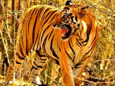 Bandhavgarh Wildlife Photo Tour – India Wildlife Photography Tour