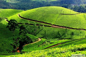 Winter Special South India Tour Package From Pleasure Holiday
