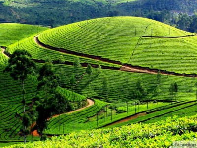 Picturesque Munnar & Ooty Tour Package By Yatra