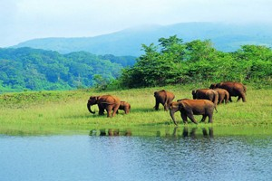 Delight Kerala Backwaters & Wildlife Tour Package By Aeronet Holidays