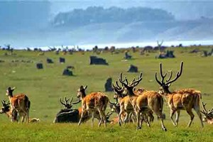 Explore Corbett and Rajaji National Park Tour Package By Thomas Cook