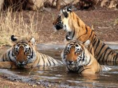 Golden Triangle with Tiger Travel Package by Hi Tours