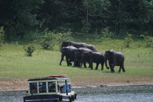 Colors Of Kerala Tour Package With SOTC KUONI