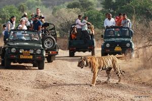 Rajasthan Safari Tour Package from Flamingo Travels