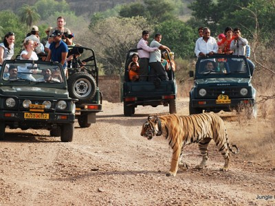 Rajasthan Safari Tour Package from Flamingo Travels