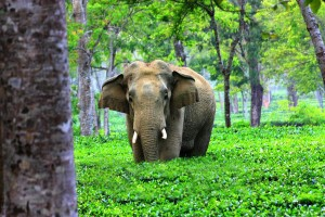 Assam Wildlife Tour Package By Ansuman Travel