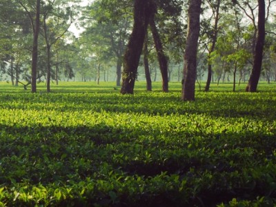 Explore The Tea City Of India With Spicejet