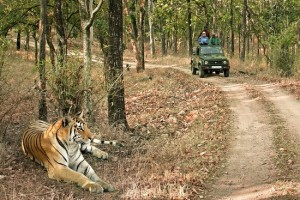 Pench Tiger Safari Tour Package