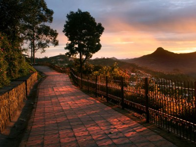Explore Nilgiri Picturesque Hill Tour Package By Cox & Kings