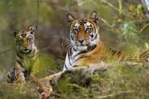 Best wildlife Safari in India Tour Package