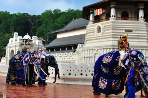 Sri Lanka Paradise Tour Package By Pack N Go Holidays